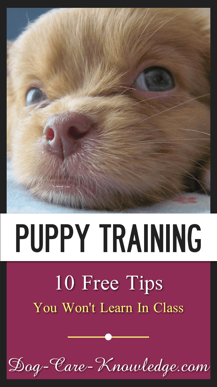 Free puppy training tips for teaching your puppy to potty in the right place, stop biting, leash walking and bonus tips you might not have heard of.