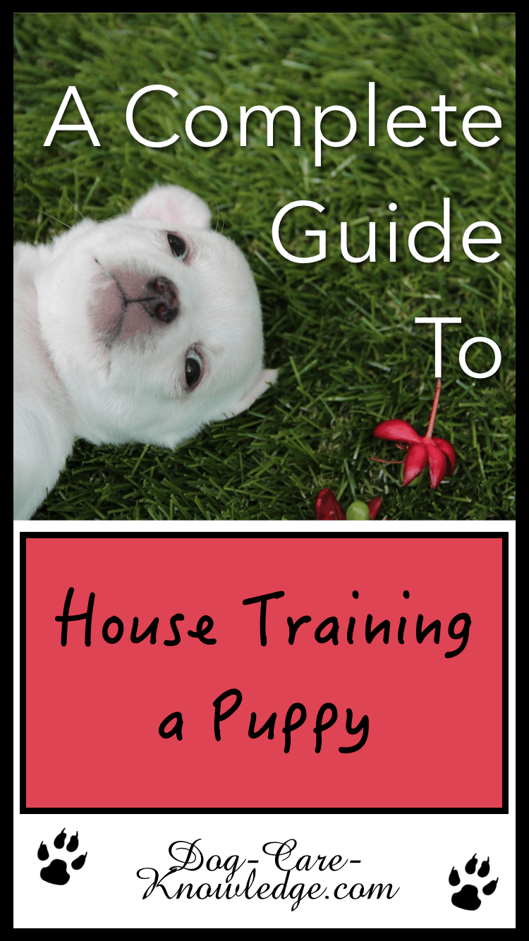 House Training A Puppy Tips