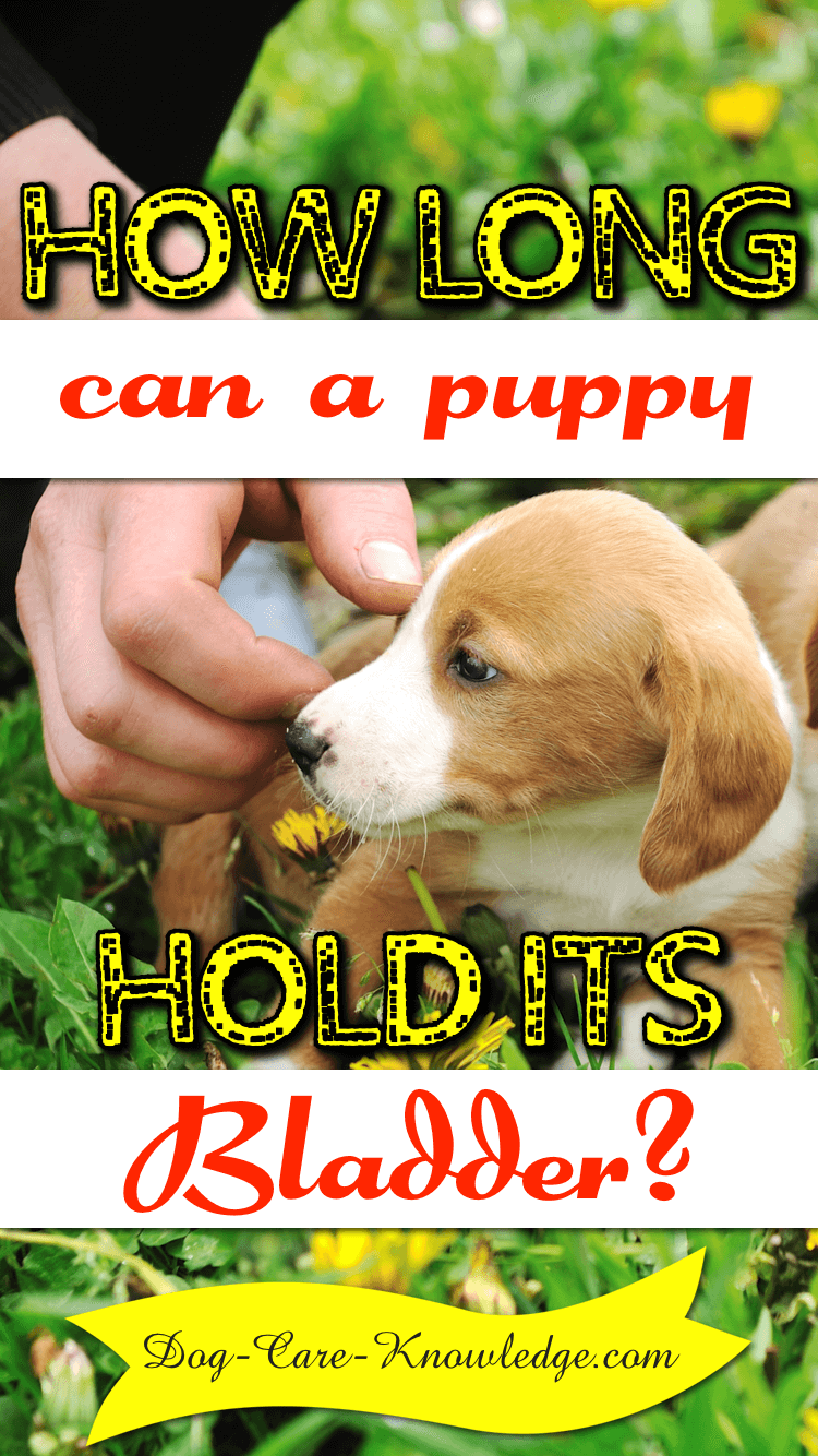 How long a puppy can realistically hold its bladder.