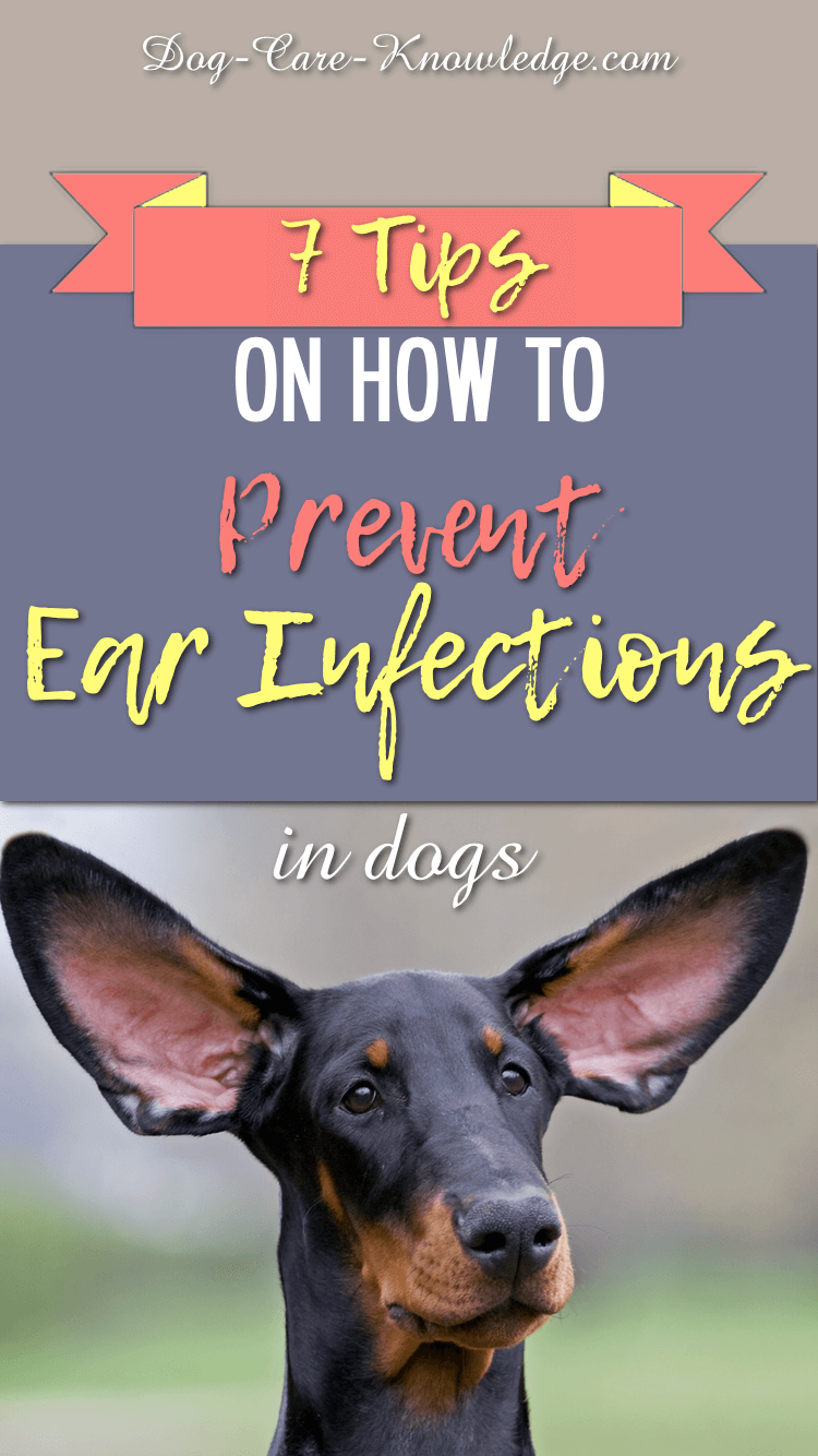 7 Tips On Preventing Ear Infections in Dogs