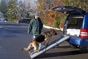 GSD using a ramp to get into a car.
