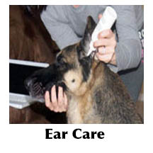 Dog ear care