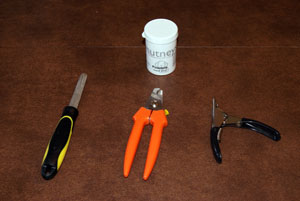Equipment for trimming dog nails