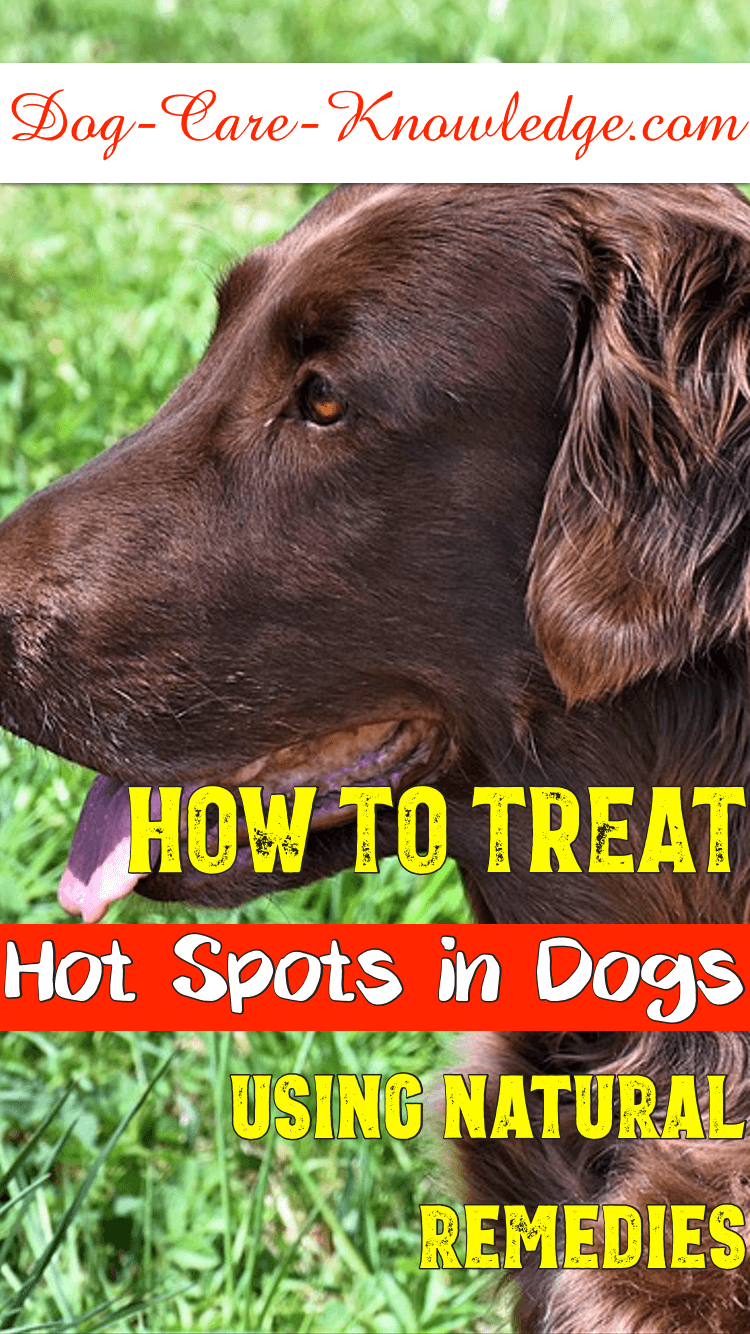 How to treat hot spots in dogs using natural remedies.