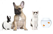 Dogs and other pets can benefit from you having your own pet related business.