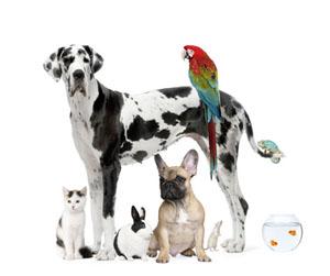 pet sitter business involves multiple pets.