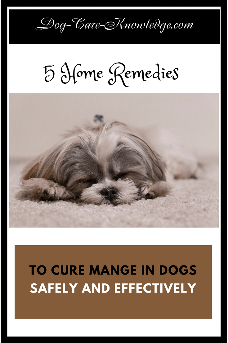 Dog mange home remedy treatment plans that are proven to work in getting rid of mange in dogs.