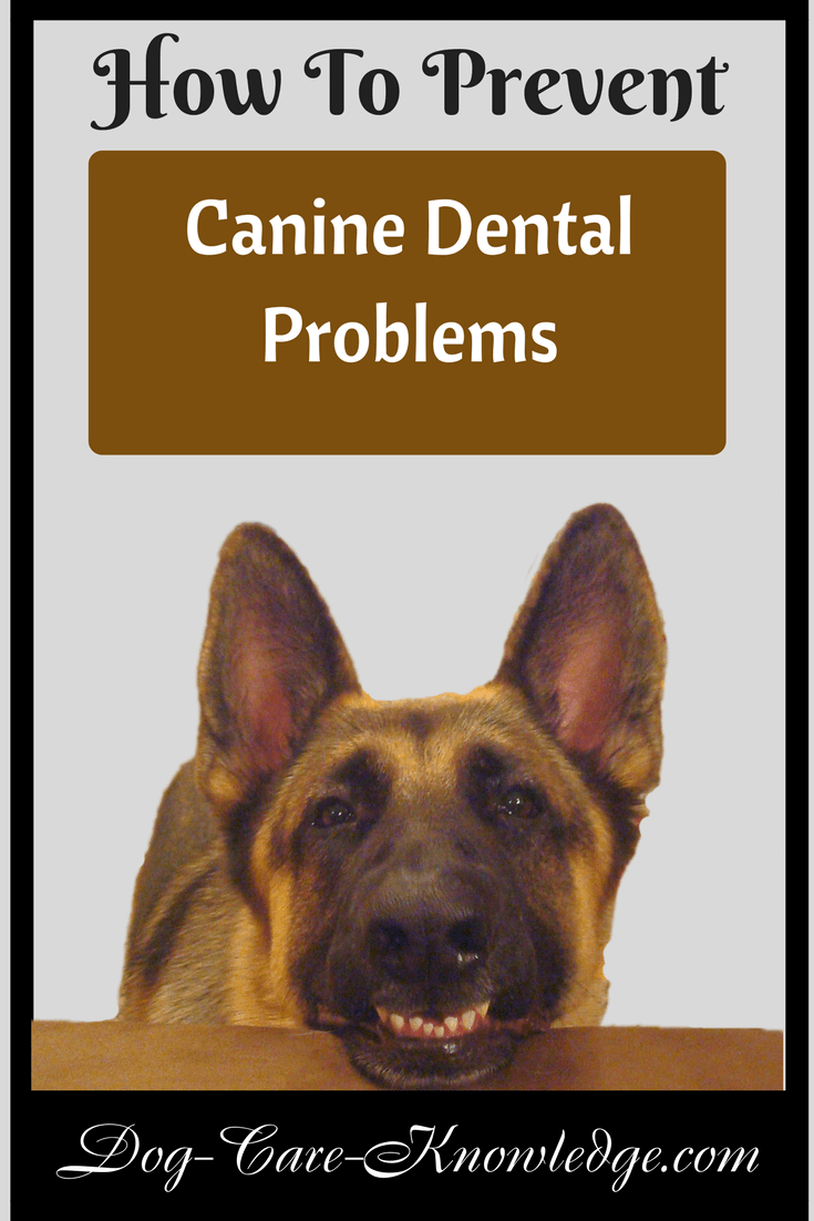 Tips and techniques to prevent canine dental problems starting in your dog's teeth.