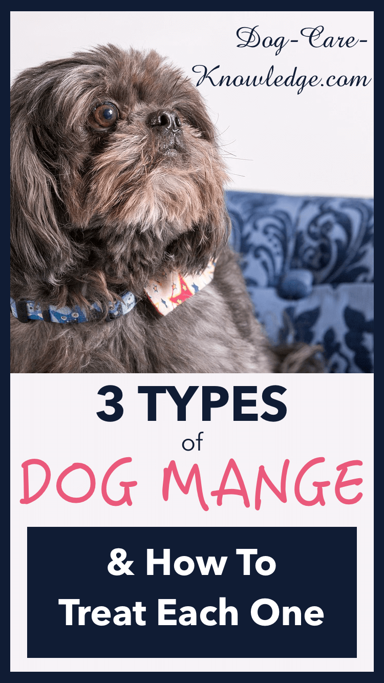 3 types of dog mange you need to know now