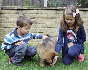 Introducing a puppy to children is all part of a pup's socialization experience.