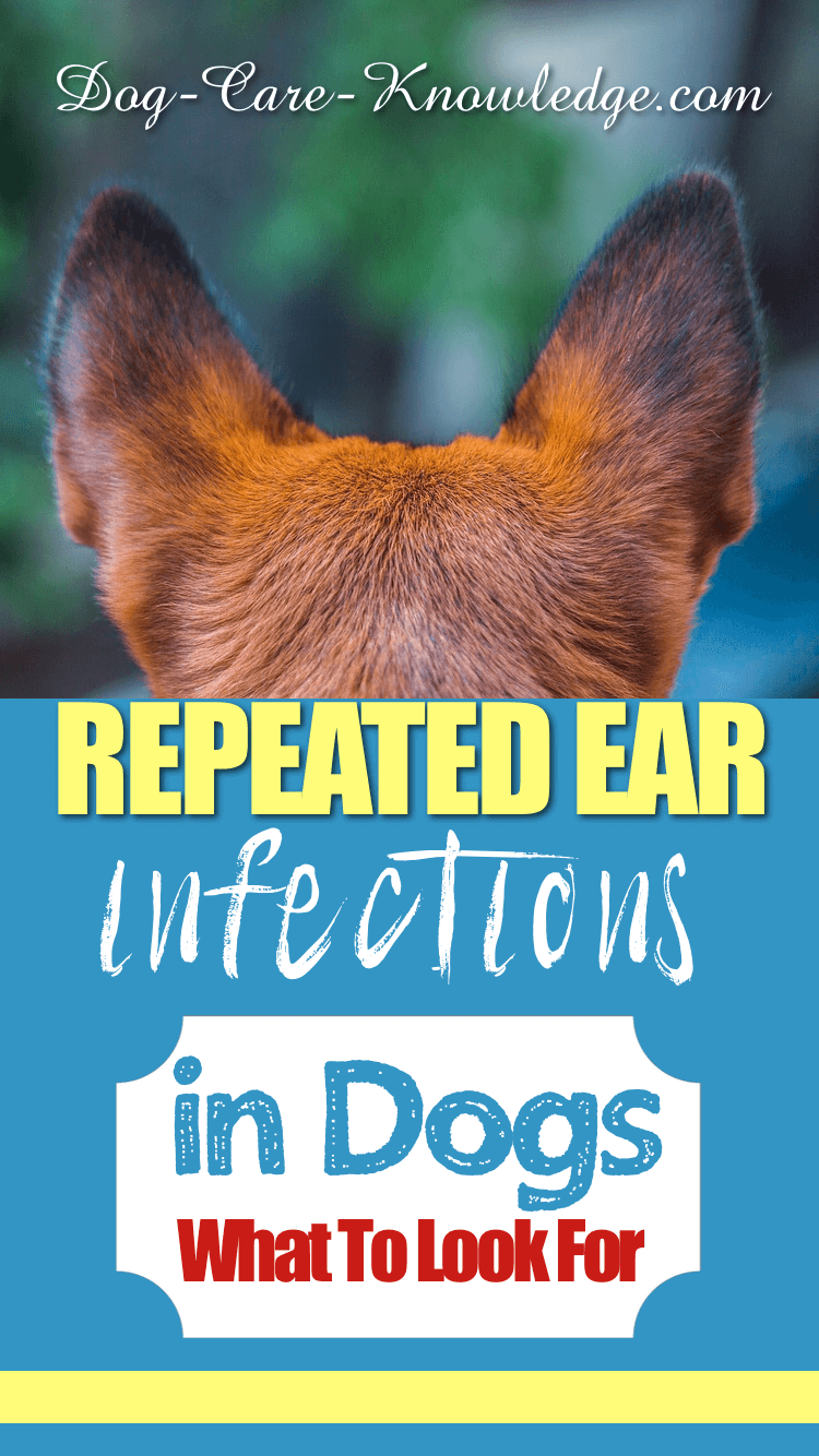 Repeated Ear Infections in Dogs