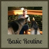 Basic care routine for your dog.