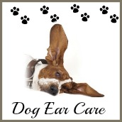 Caring for a dog's ears.