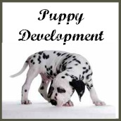 Puppy development stages.