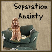 Separation anxiety in puppies and dogs can be caused by stress and boredom.