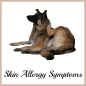 Dog skin allergy symptoms.