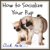 Tips on how to socialize your pup.