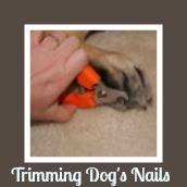 How to trim a dog's nails.