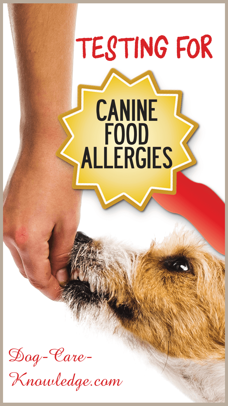 Testing for Canine Food Allergies