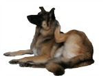 Itchy dog is a sign of dog skin allergies.