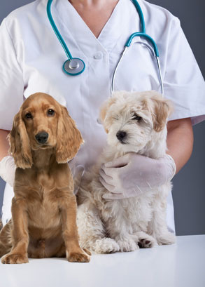 Annual vet visits for dogs.