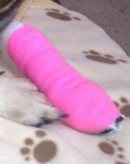 Bandaged dog paw.