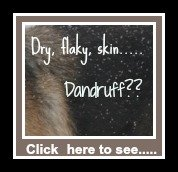 Dandruff in dogs.