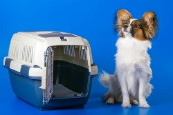 Pet relocation business involves transporting pets from one location to another.