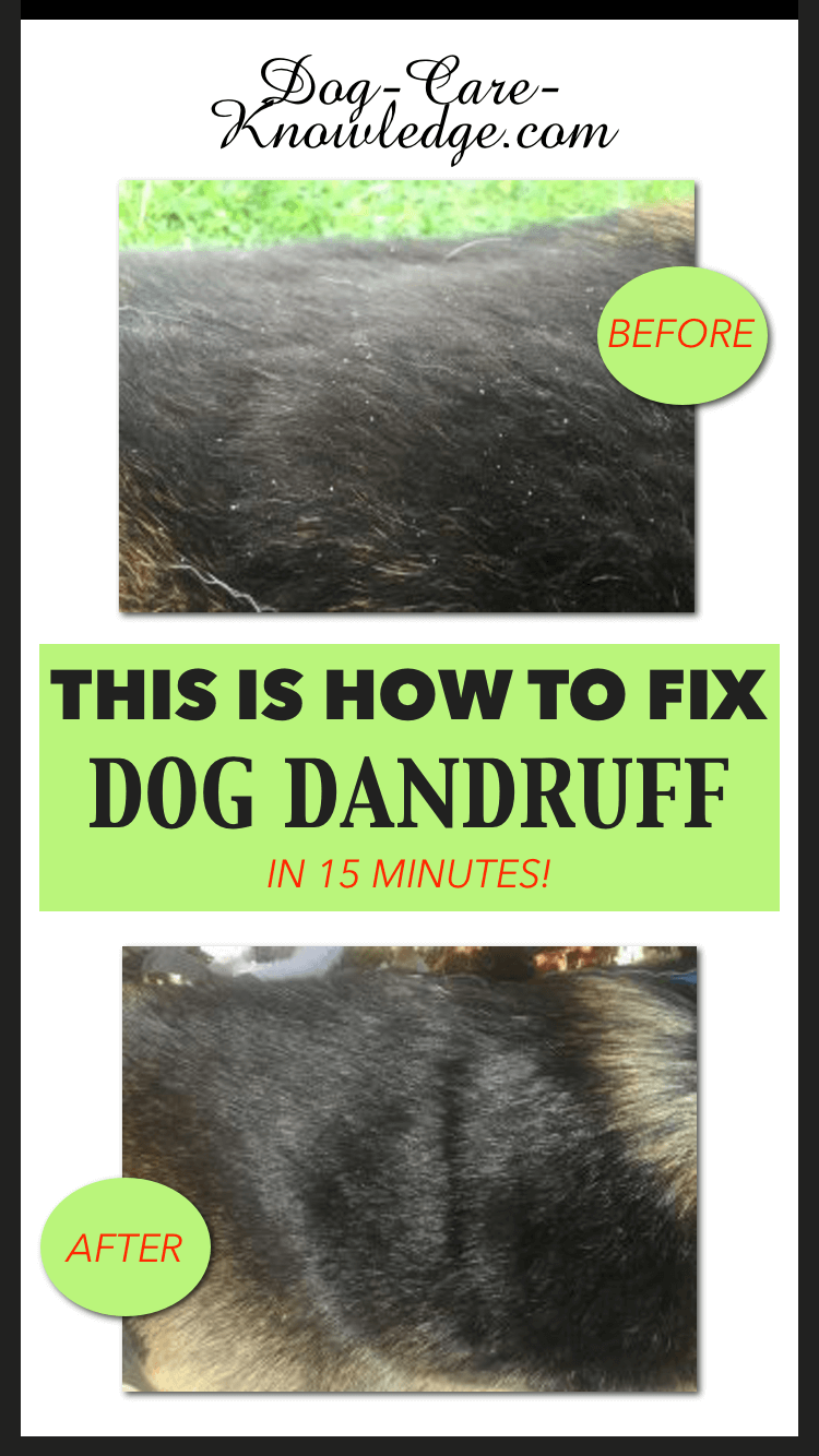 Dog dandruff treatment