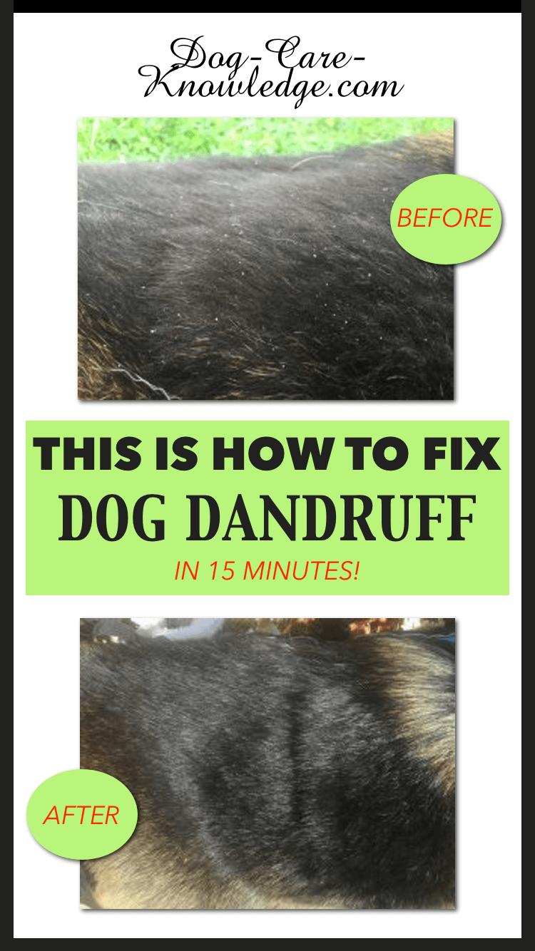 Dog dandruff treatment