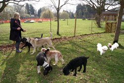 Doggie daycare is a great dog business that is very popular.