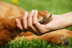 dog paw care tips.