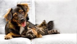 Pet sitting involves taking care of clients' pets in their own home while the owners are away.