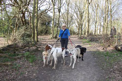 Of all the dog businesses, dog walking is probably the easiest and cheapest to start.  Most of the time you can have your own dog with you.