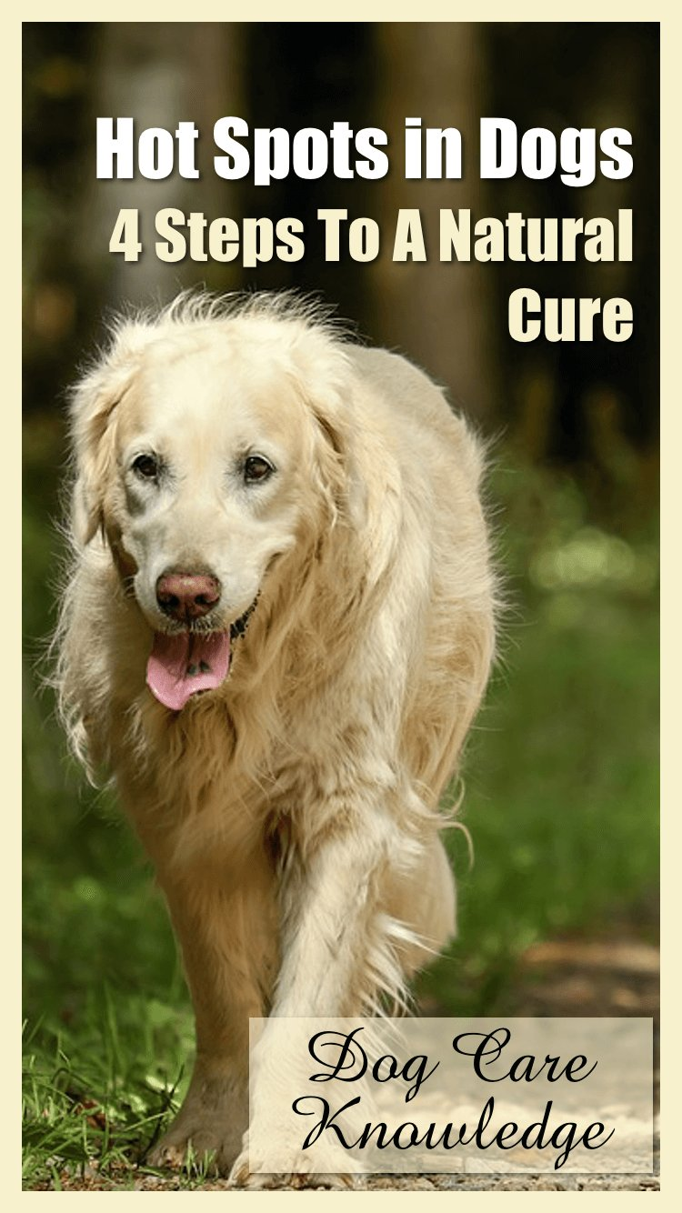 Hot Spots in Dogs - 4 Steps to a Natural Cure.
