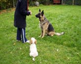 Introducing a puppy to your existing dog.