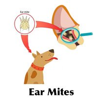 Character of ear mites in dogs