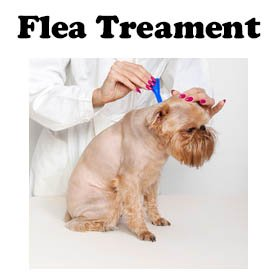 Flea treatment for dogs.