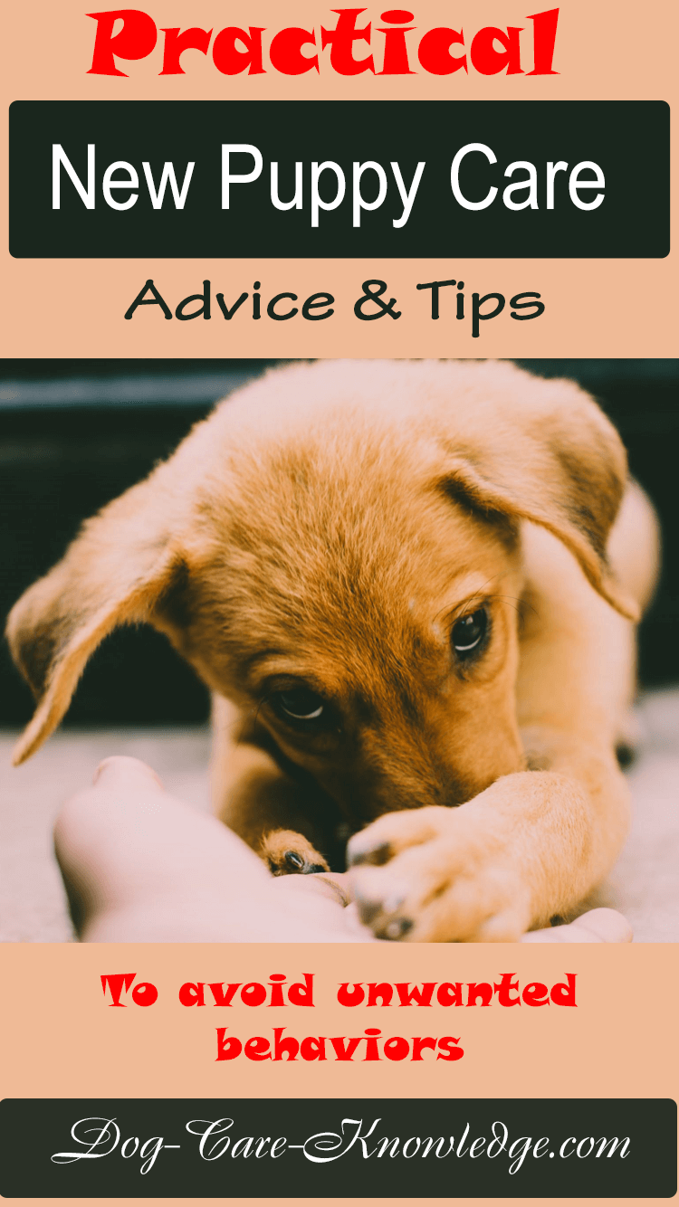 New puppy care tips and advice for dog owners that want to stop unwanted behaviors before they start.