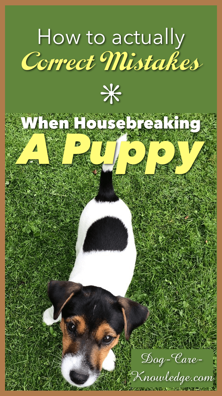 Easy training tips for correcting common mistakes when housebreaking a puppy.
