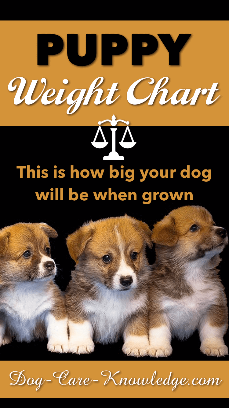 Puppy weight chart to predict how big your puppy will be when full grown.