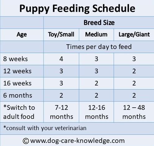 Puppy Feeding Schedule