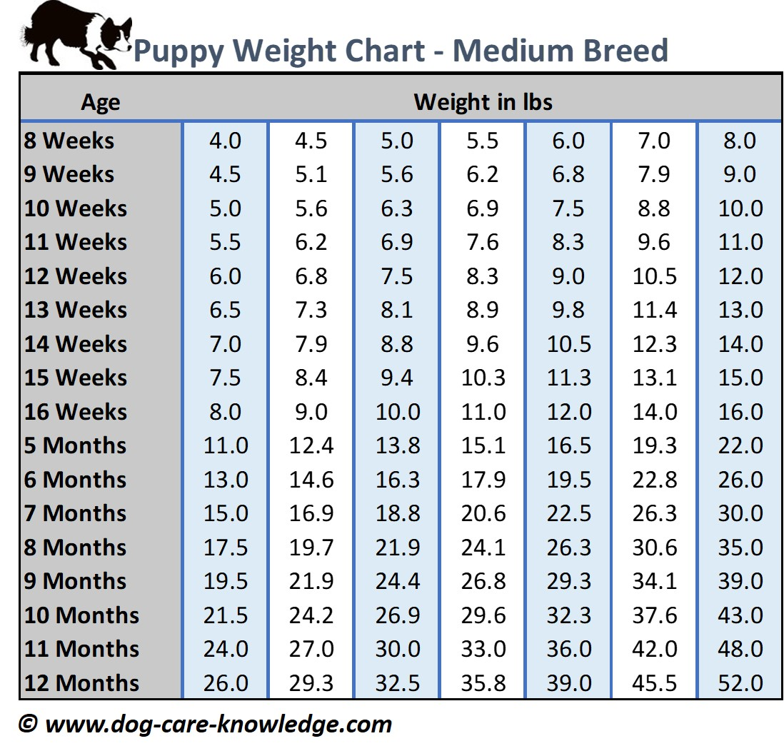 Puppy Weight Chart For Medium Size Breed Dogs