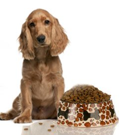 Dog food allergies result in itching and scratching year long.