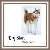 Dogs often suffer from dry skin in winter.