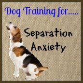 Dog training tips to help dogs with separation anxiety.