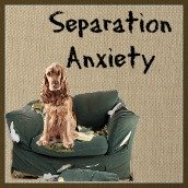 Separation anxiety in dogs.