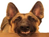 Teeth care routine for dogs.