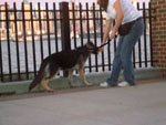 Walking backwards and treating your puppy when it follows helps to leash train.